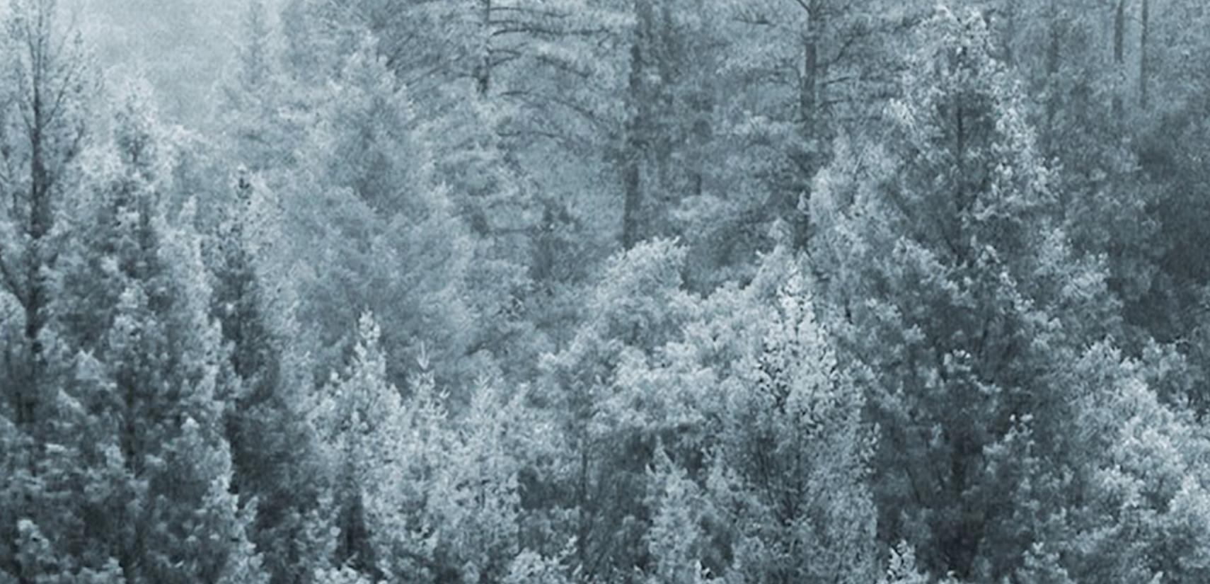 TMU - Modularer Holzbodenbaukasten